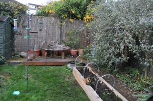 Raised bed & buddleia
