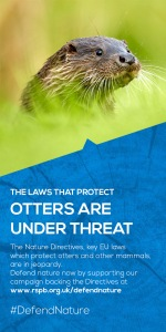 The laws that protect otters are under threat: defend nature by supporting the RSPB campaign to protect the EU Nature Directives